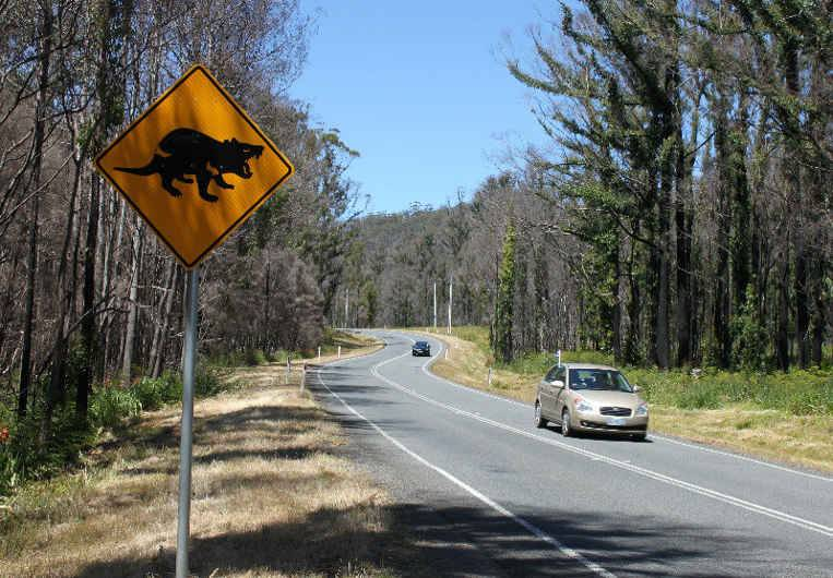 tassie road with sign image
